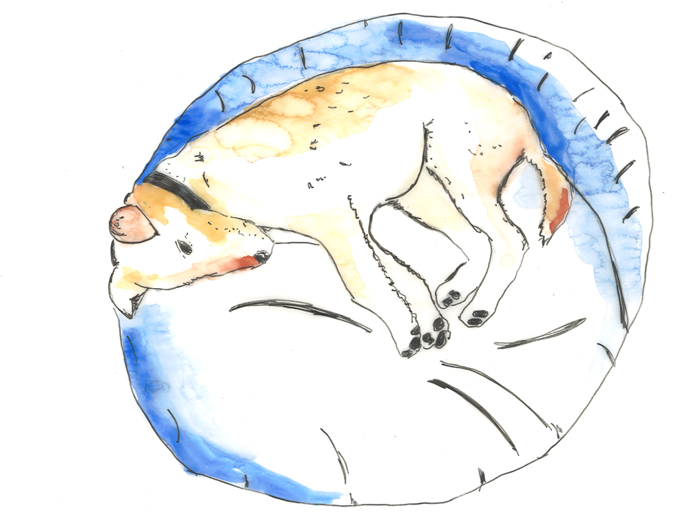 Uebernachtungsservice, Übernachten Hund, Gassi gemma, Hundebetreuung, Hundeservice