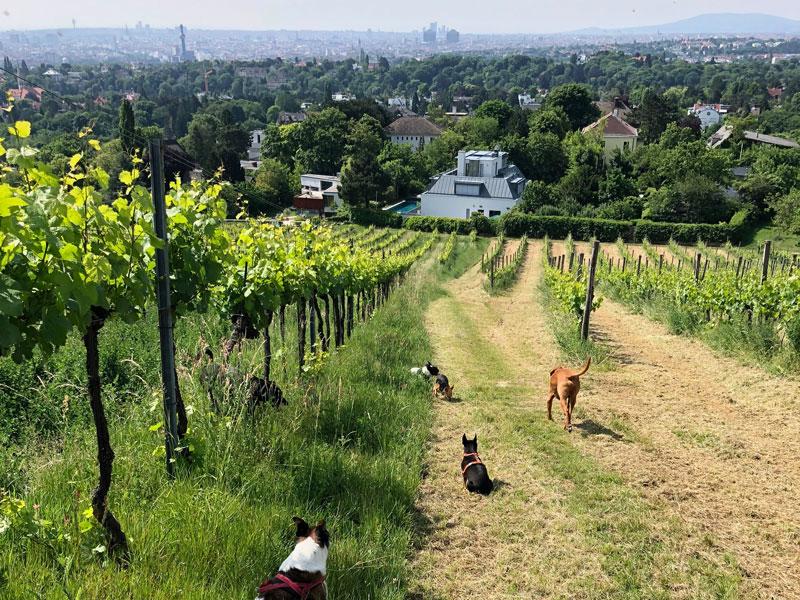 Hundebetreuung Klosterneuburg
